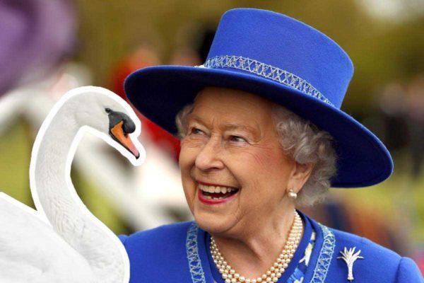 Все лебеди в Великобритании принадлежат королеве: миф или реальность?